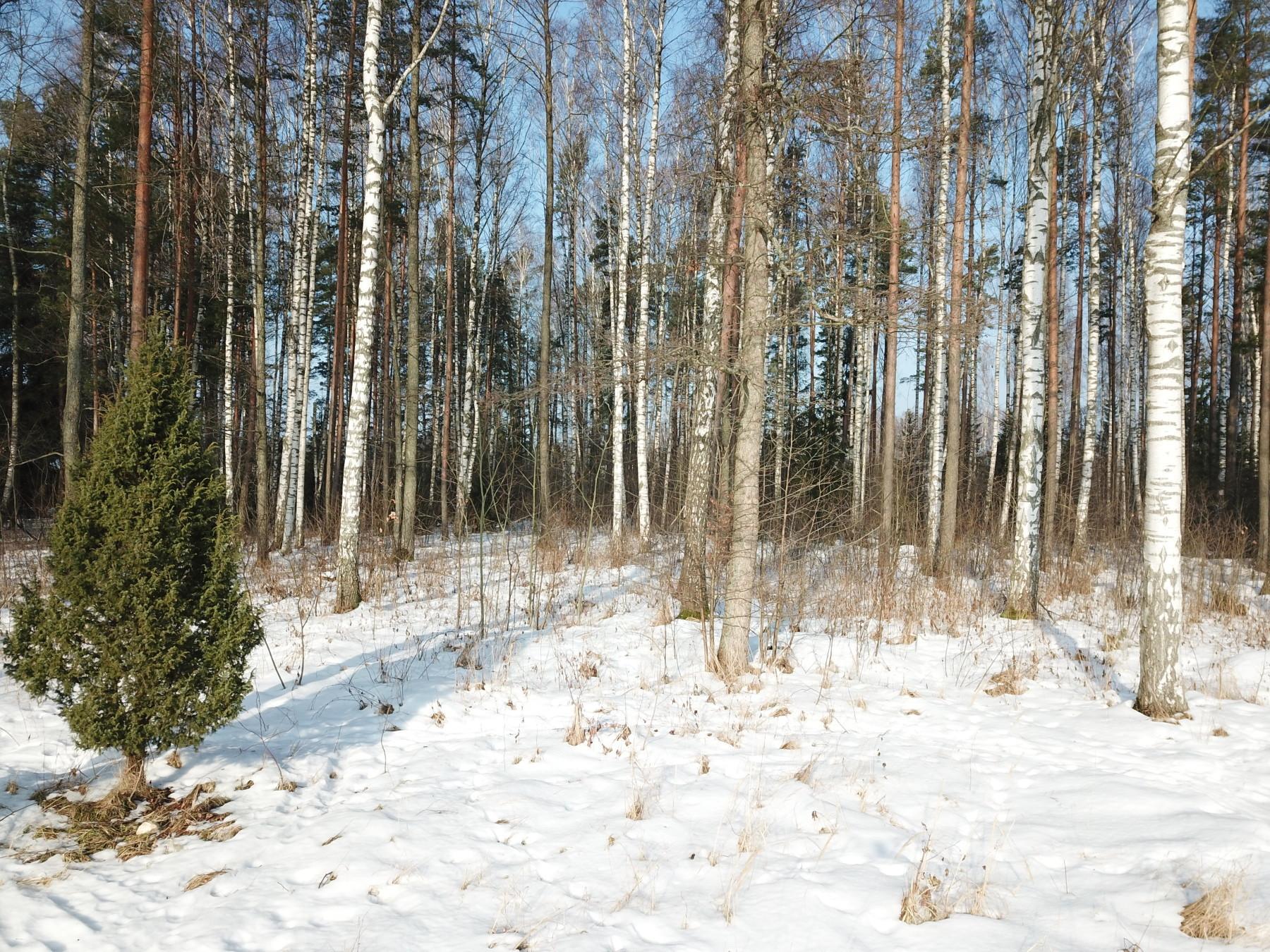 SAULKRASTU, Lapiņu - 1